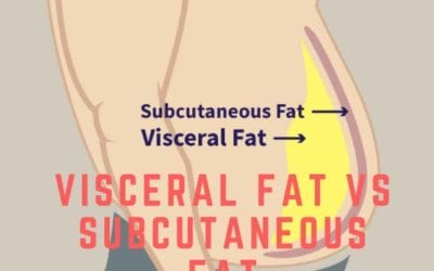 Visceral Fat vs. Subcutaneous Fat